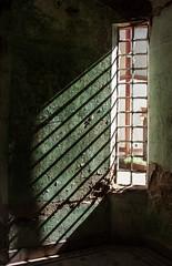 Refugiado (Barbara Larsen) Tags: light luz window canon ventana fear hide scared hidding oculto