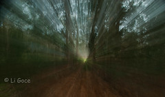 Claro de Luz (li.goce) Tags: winter tree luz forest rboles bosque invierno zooming encantado morade baionapontevedraespaa