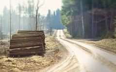 P2 (Robert Björkén (Hobbyfotograf)) Tags: skog träd kalhygge landsväg lerdala