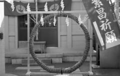 160618_NikomatFt2_020 (Matsui Hiroyuki) Tags: fujifilmneopan100acros nikonnikomatft2 nikonnikkorhauto85mmf18 epsongtx8203200dpi