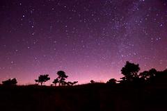Milky Way (moniq84) Tags: blue trees sky panorama mountain tree alberi backlight night dark way skyscape stars landscape darkness blu astro full via silence astrophotography cielo astrofotografia skyscapes albero milky montagna notte paesaggio controluce buio stelle stellato costellazioni lattea