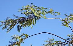 Carlsbad 7-10-16 (44) (Photo Nut 2011) Tags: carlsbad sandiego california lacostatownsquare