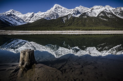 Like Glass (Explored) (Stubble Jumper Photography) Tags: rockymountains rockies mountains alpine snow reflection water glass stump tree alberta