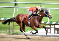 2016-07-15 (32) r2 Alex Cintron on #7 Cool Arrow (JLeeFleenor) Tags: photos photography md maryland marylandhorseracing jockey   jinete  dokej jocheu  jquei okej kilparatsastaja rennreiter fantino    jokey ngi horses thoroughbreds equine equestrian cheval cavalo cavallo cavall caballo pferd paard perd hevonen hest hestur cal kon konj beygir capall ceffyl cuddy yarraman faras alogo soos kuda uma pfeerd koin    hst     ko  outside outdoors