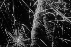 Black and White Fireworks (DancingTerrapin) Tags: summer abstract ga georgia fireworks country explosion saturday pride firework fourthofjuly abstracts july4th patriotism independenceday nationalism 2016 pauldingcounty