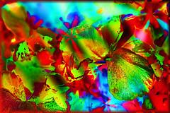 Pensamientos alegres (seguicollar) Tags: flower flores brillante color colorido red rojo green verde vegetal plantas pensamientos imagencreativa virginiasegu photomanipulacin photomontaje photocomposicin