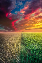 Life in Abundance  #digitalart #artwork #Switzerland #landscape #nature #clouds #field #fineart #earth #colors #fantasy #dream #composition #capture (seelenduft) Tags: landscape switzerland digitalart earth clouds dream artwork capture fantasy colors nature composition fineart field