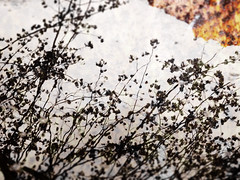 in hell (Rossdxvx) Tags: abstract art surreal surrealism shadows silhouette flower decay decaying dilapidated dilapidation dark rust rot minimalism michigan metallic midwest metal usa overlay overexposed outdoor outdoors textured texture textures