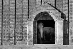 Ist die Luft wieder rein? (ingrid eulenfan) Tags: leipzig zoo elefant elefantenhaus rssel luft