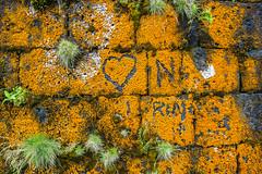 Amor Naranja (Udri) Tags: 2016 isla island islas sign viaje azores aores liquen love musgo naranja orange pentaxk3 portugal seal simbolo