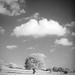 Lonely+Tree+IR+%5BOlympus+Trip+35%5D