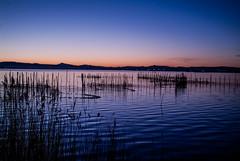 puesta de sol albufera de valencia (Carlos Server Photography) Tags: valencia puestasol albufera saler parquenatural