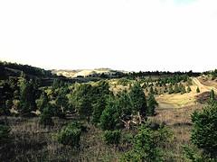 Skyline Ranch Christmas Tree Farm 2.2 (wbaiv) Tags: california ranch christmas sky tree wet beautiful skyline landscape highway december cloudy farm saratoga ground made human 35 agricultural