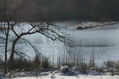 the tree and the pond (Ren Mouton) Tags: winter cold ice landscape countryside walk sneeuw nederland thenetherlands limburg landschap wandeling ijs sno koud platteland velden landelijk agrarisch hasselderheide