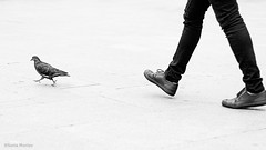 (Sonia Montes) Tags: madrid blackandwhite bw black byn blancoynegro canon streetphotography paloma bn pies caminar piernas
