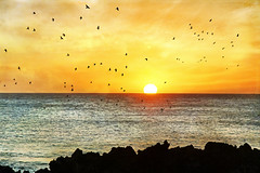 a sunset fancy (1crzqbn) Tags: sunset seascape color birds reflections textures 7d tmi hss asunsetfancy