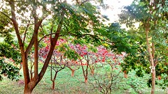 IMG_20140714_163628959_HDR (Caique Cesar) Tags: new flowers trees red brazil flores tree green primavera beautiful brasil wonderful amazing cool nice fantastic sweet sony awesome sunny incredible impressive impressionante incrivel brasilemimagens