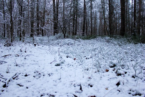 "Im Winterwald (mit Schnee) 2015 • <a style=""font-size:0.8em;"" href=""http://www.flickr.com/photos/69570948@N04/16216417718/"" target=""_blank"">View on Flickr</a>"