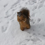 Squirrels in the Snow at the University of Michigan (January 7, 2015) thumbnail