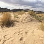 """Kelso Sand Dunes <a style=""""margin-left:10px; font-size:0.8em;"""" href=""""http://www.flickr.com/photos/39763396@N05/16369866380/"""" target=""""_blank"""">@flickr</a>"""