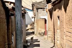 501 Xingmeng (farfalleetrincee) Tags: china travel dog history tourism asia village adventure mongolia guide yunnan streetview urbanlandscape 云南 tonghai minoritygroup mongols gengiskhan yuandynasty xingmeng 兴蒙蒙古族乡 通海县