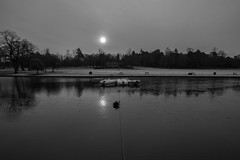 Float (@Dave) Tags: park mist lake cold ice water boats geese birmingham nikon hill freezing freeze cannon february nikkor dslr brrr brum 2015 d600