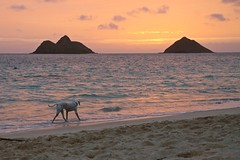 02232015_011_ (ALOHA de HAWAII) Tags: hawaii oahu dogwalking mokuluaislands sunriseatlanikaibeach