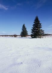 Fagne de Polleur (frank verlinden) Tags: trees snow mamiya nature de 645 velvia pro fujifilm 50 rood fagne polleur