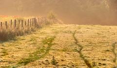 Gentle Summer Meadow (Ninja Dog - ) Tags: uk trees summer england colour nature landscape countryside nikon scenery warm northamptonshire meadow july newton tonemapped 2013 d80 geddington