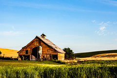 Calm in the storm (Culinary Fool) Tags: wheat usa washington 2016 roadtrip culinaryfool wa brendajpederson travel palouse photography rollinghills hills farm ranch may barn travelwa 2470mm28