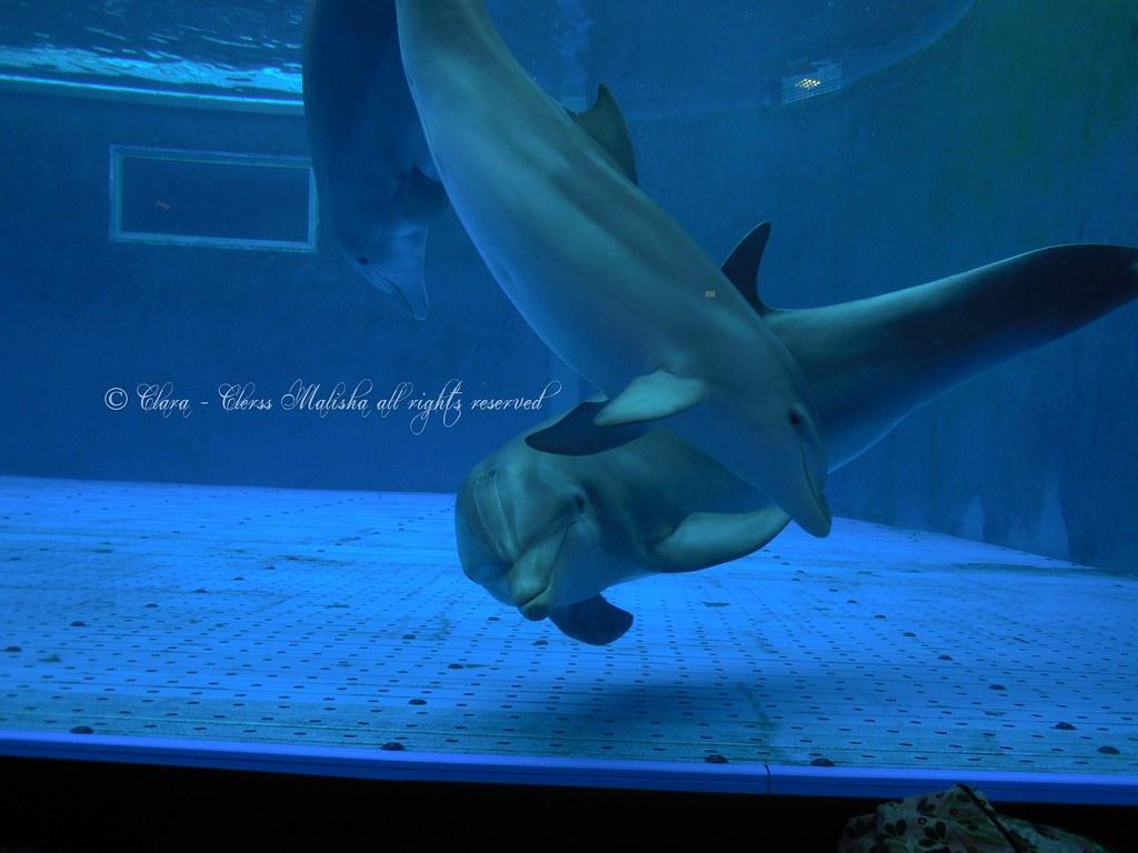 cetacea liguria - photo#25