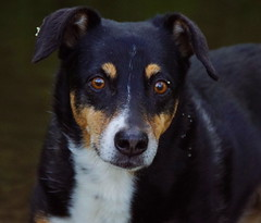 Leila I (TeamFotoBleh) Tags: dog nature animal sweet natur hund tier spaziergang ss