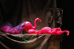 Still Life with Flamingos (Studio d'Xavier) Tags: pink stilllife skeleton flamingos strobist