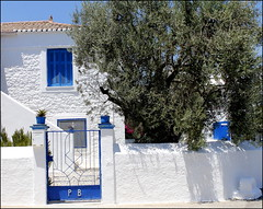 Typical greek house with an olive tree (maria xenou~photodromos~) Tags: blue summer colours sommer greece tradition blau griechenland farben olivenbaum