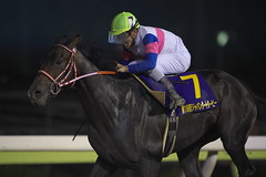 Kyoei Gere -Japan Dirt Derby (arumckF) Tags: horserace kyoeigere deepsky laurelange keitatosaki yoshitoyahagi       ohi japandirtderby  group1 jpn1