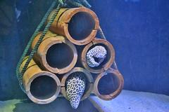 Fish hammock (medanian) Tags: zeiss nikon indoor collection carl langkawi underwaterworld kedah fishs cenang manuallens purist closefocusing d7100 distagont2825 noeditinginvolved jewelofkedah