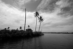 Backwaters, Alappuzha (S.R.C) Tags: alappuzha alleppey kerala india houseboat coconut river water