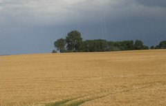Amber waves of grain (cohodas208c) Tags: takenfromthetrain schleswigholstein northoflbeck fields farms fertile