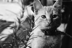 (Karina Marques Fotografia) Tags: cats cat animals animais gato felino felinos 44mm canon nikon pb nature plants lavanda