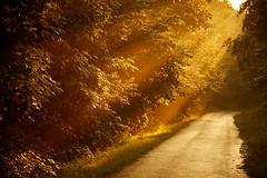 After the rain (generalstussner) Tags: landscape misty foggy sunrays ray sun orange warmlight path nature natur