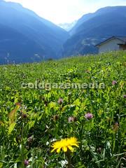 20150927_113157 (coldgazemedia) Tags: photobank stockphoto scenery schweiz switzerland swissvillage swissalps landscape brig birgish mund alps mountain swisshuts alpine alpinehut bluesky blue meadow