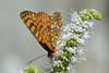 Poço da Broca, Serra da Estrela (Carlos Pinto 73) Tags: poço broca serra estrela butterfly