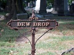 Dew Drop (Inn? Street.), Mount Pleasant Cemetery, Newark (Nesster) Tags: newark nj mount pleasant cemetery zuiko 2848mm f4