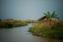 Amata Garden Resort (*Kicki*) Tags: myanmar burma inlelake lake inle inlaylake inlay canal water nature shanstate plant sky houses hotel amatagardenresort amata amatagarden bananaplant waterscape boathouse