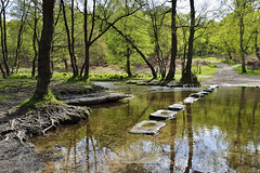 Stepping Stones, Brocton, Staffordshire 15/05/2016 (Gary S. Crutchley) Tags: cannock chase stepping stones brocton staffordshire uk great britain england united nikon d800 travel raw forest nikkor afs 28300mm f3556g ed vr