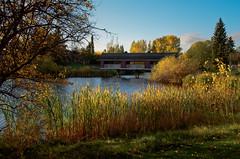 Woodbridge - # 7 September (L E Dye) Tags: 12monthsofthesameimage woodbridgefarms alberta canada d5100 ledye nikon september fall