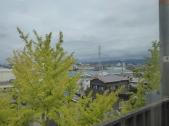 Ginkgo trees along the line (seikinsou) Tags: japan spring haruka train jr railway kix kansai airport shinosaka ginkgo tree leaf