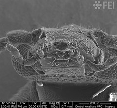 the ugly guy (FEI | Part of Thermo Fisher Scientific) Tags: fei microscopy nanotechnology nanoimage magnification feiimagecontest inspect materialsscience nanodevices