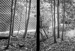 De Young trees diptych (aweiss.sf) Tags: 38mm analog california deyoung diptych film fp4 halfframe ilford museum olympus pen penft tree blackandwhite