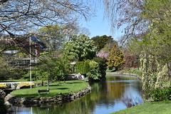 Mona Vale, Christchurch, NZ (Spreydon) Tags: monavale christchurch spring